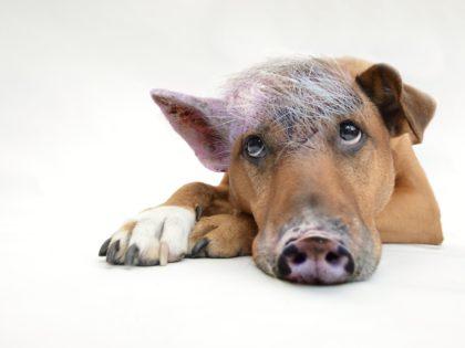 5 Tipps gegen den inneren Schweinehund